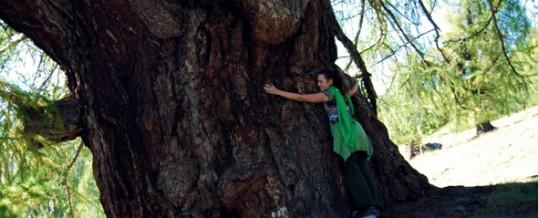 Technique de connexion avec les arbres