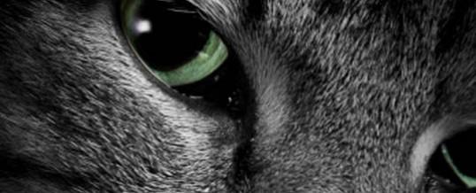 Le 6e Sens chez les Animaux